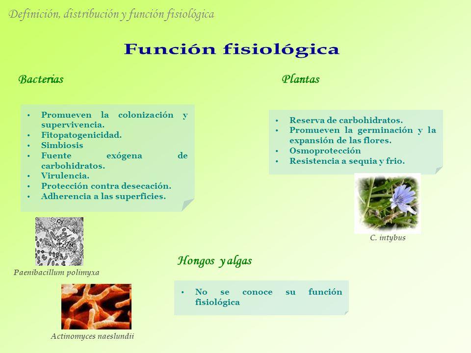 Definición, distribución y función fisiológica