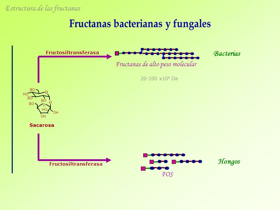 Fructanas bacterianas y fungales Fructosiltransferasa