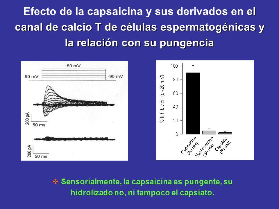 Efecto de la capsaicina y sus derivados en el canal de calcio T de células espermatogénicas y la relación con su pungencia