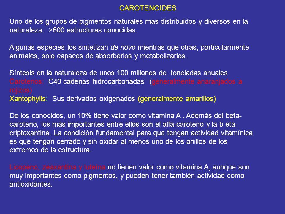 CAROTENOIDES Uno de los grupos de pigmentos naturales mas distribuidos y diversos en la naturaleza. >600 estructuras conocidas.