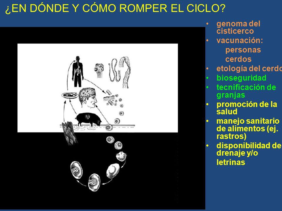 ¿EN DÓNDE Y CÓMO ROMPER EL CICLO
