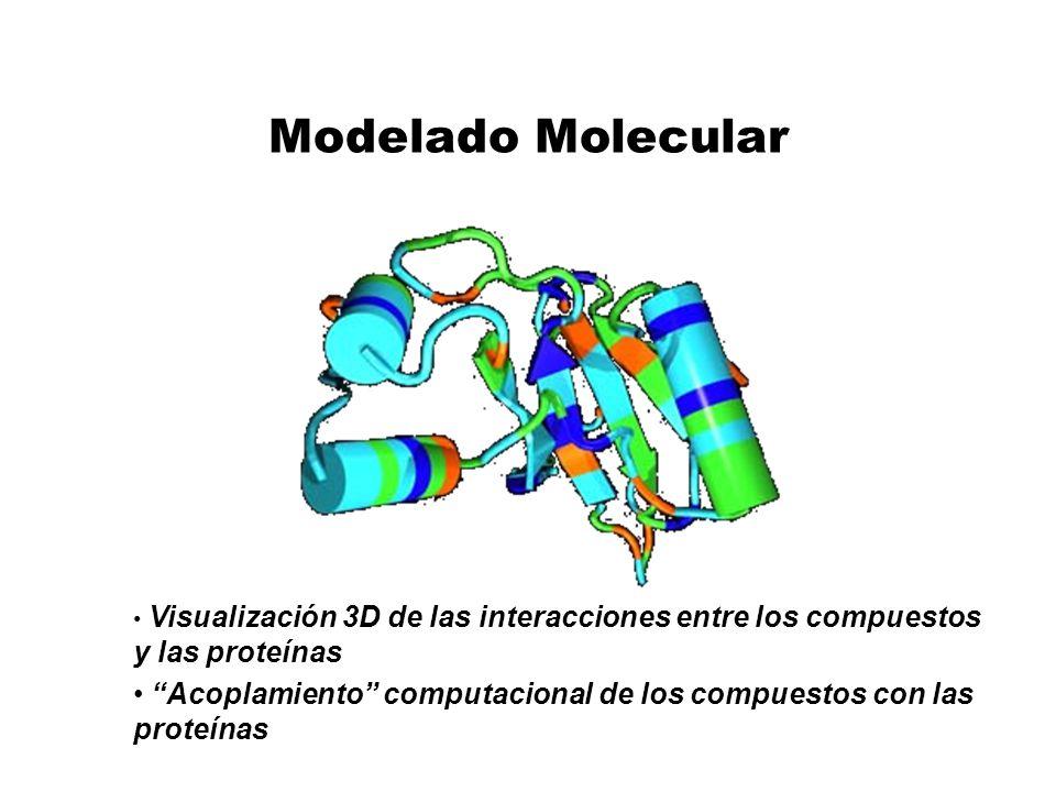 Modelado Molecular Visualización 3D de las interacciones entre los compuestos y las proteínas.