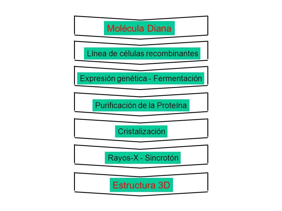 Molécula Diana Estructura 3D Línea de células recombinantes