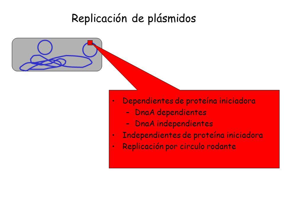 Replicación de plásmidos