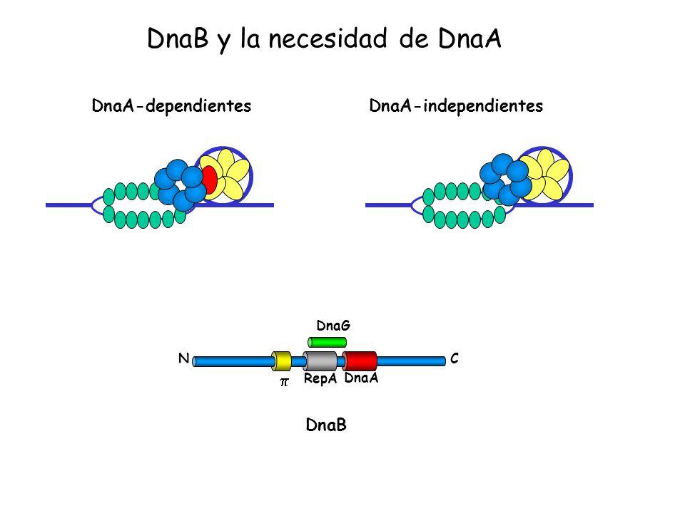 DnaB y la necesidad de DnaA
