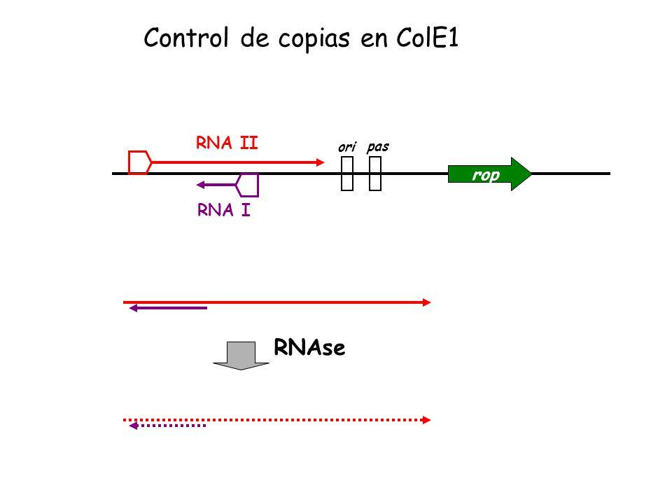 Control de copias en ColE1
