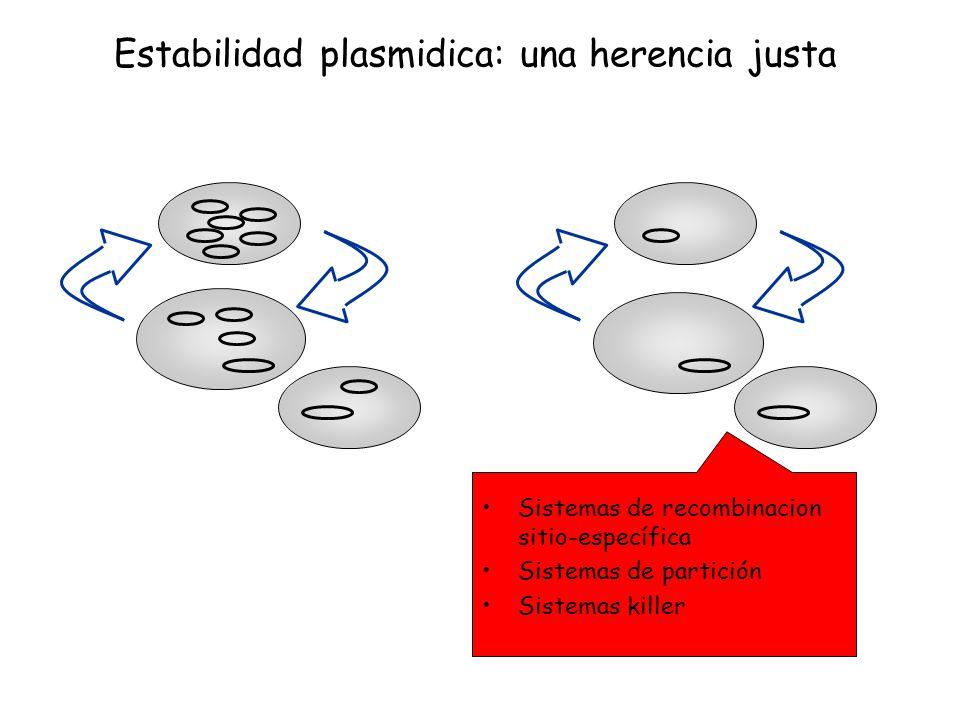 Estabilidad plasmidica: una herencia justa