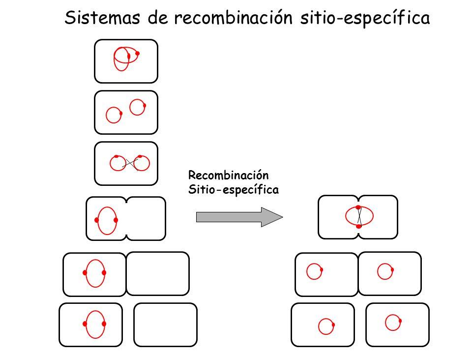 Sistemas de recombinación sitio-específica