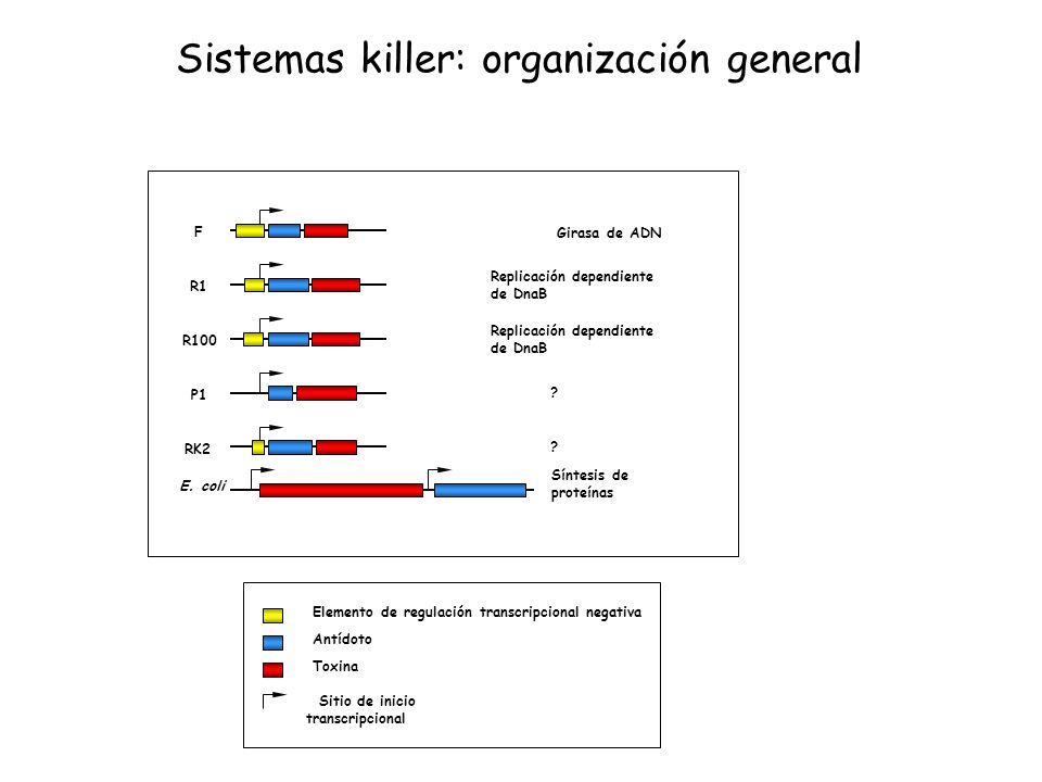 Sistemas killer: organización general