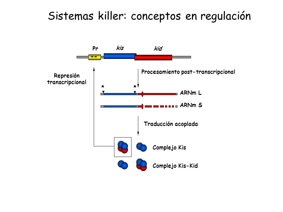 Sistemas killer: conceptos en regulación