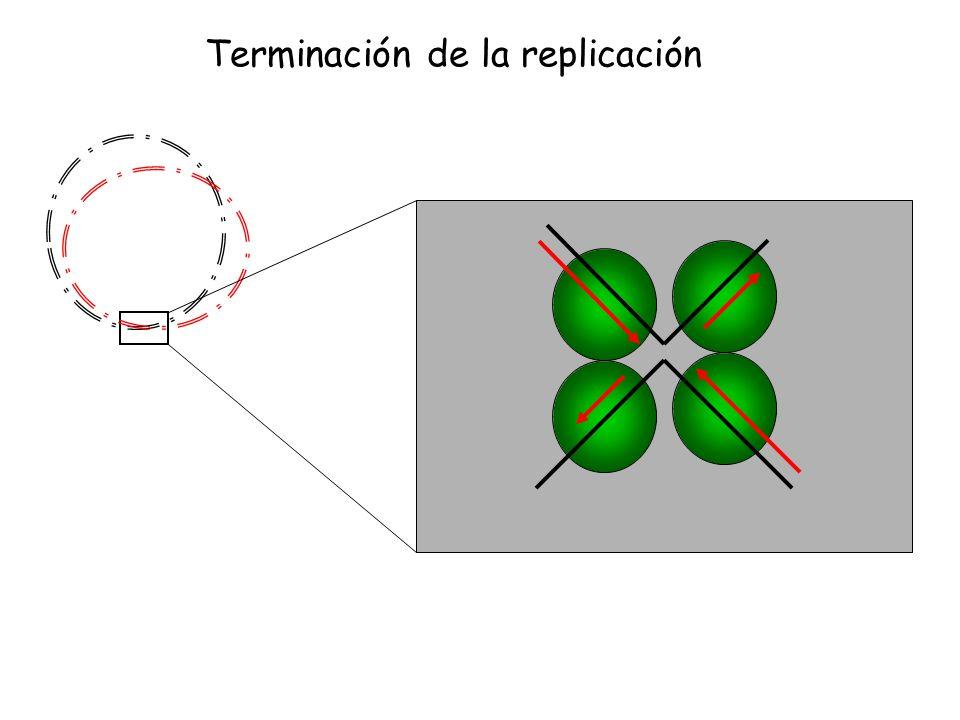 Terminación de la replicación