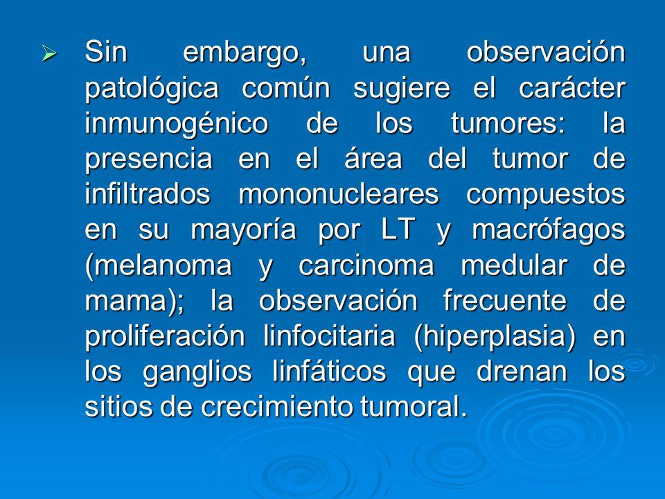 Sin embargo, una observación patológica común sugiere el carácter inmunogénico de los tumores: la presencia en el área del tumor de infiltrados mononucleares compuestos en su mayoría por LT y macrófagos (melanoma y carcinoma medular de mama); la observación frecuente de proliferación linfocitaria (hiperplasia) en los ganglios linfáticos que drenan los sitios de crecimiento tumoral.