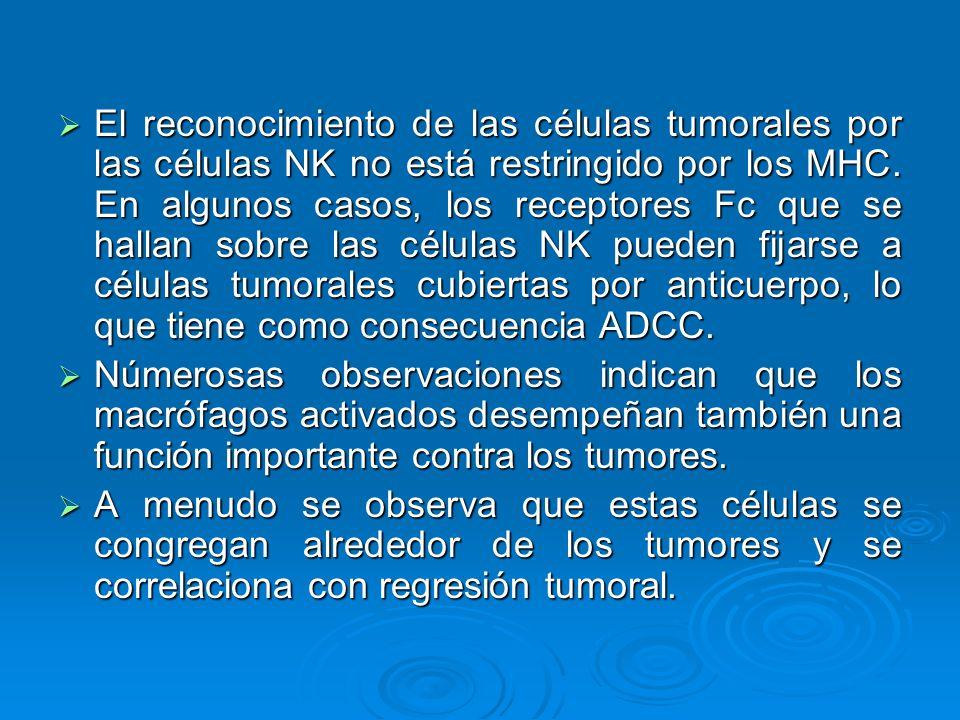 El reconocimiento de las células tumorales por las células NK no está restringido por los MHC. En algunos casos, los receptores Fc que se hallan sobre las células NK pueden fijarse a células tumorales cubiertas por anticuerpo, lo que tiene como consecuencia ADCC.