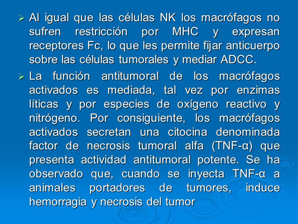 Al igual que las células NK los macrófagos no sufren restricción por MHC y expresan receptores Fc, lo que les permite fijar anticuerpo sobre las células tumorales y mediar ADCC.