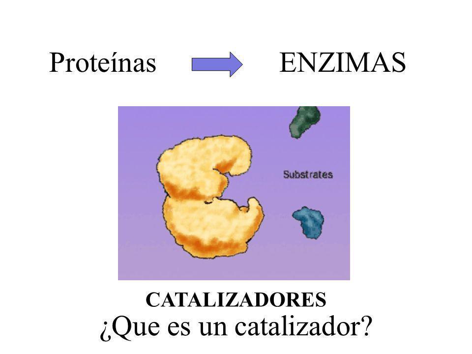 Proteínas ENZIMAS CATALIZADORES ¿Que es un catalizador