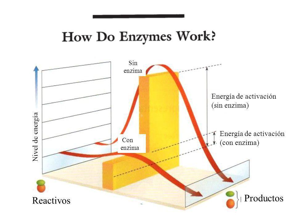 Productos Reactivos (sin enzima) Nivel de energía