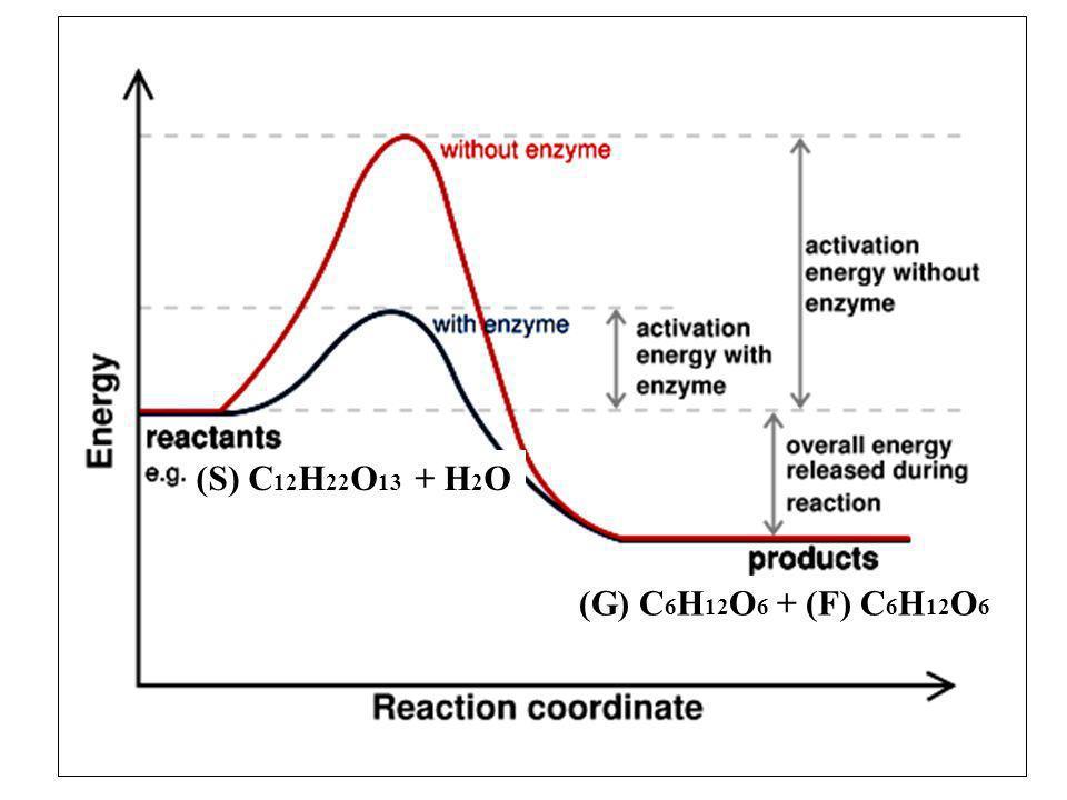 (S) C12H22O13 + H2O (G) C6H12O6 + (F) C6H12O6