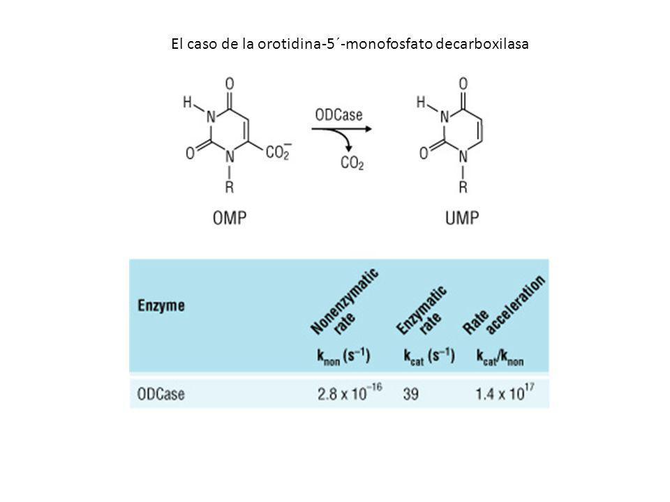 El caso de la orotidina-5´-monofosfato decarboxilasa