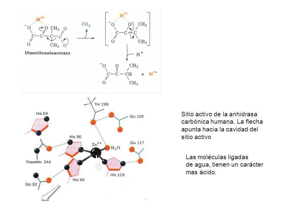 Sitio activo de la anhidrasa carbónica humana