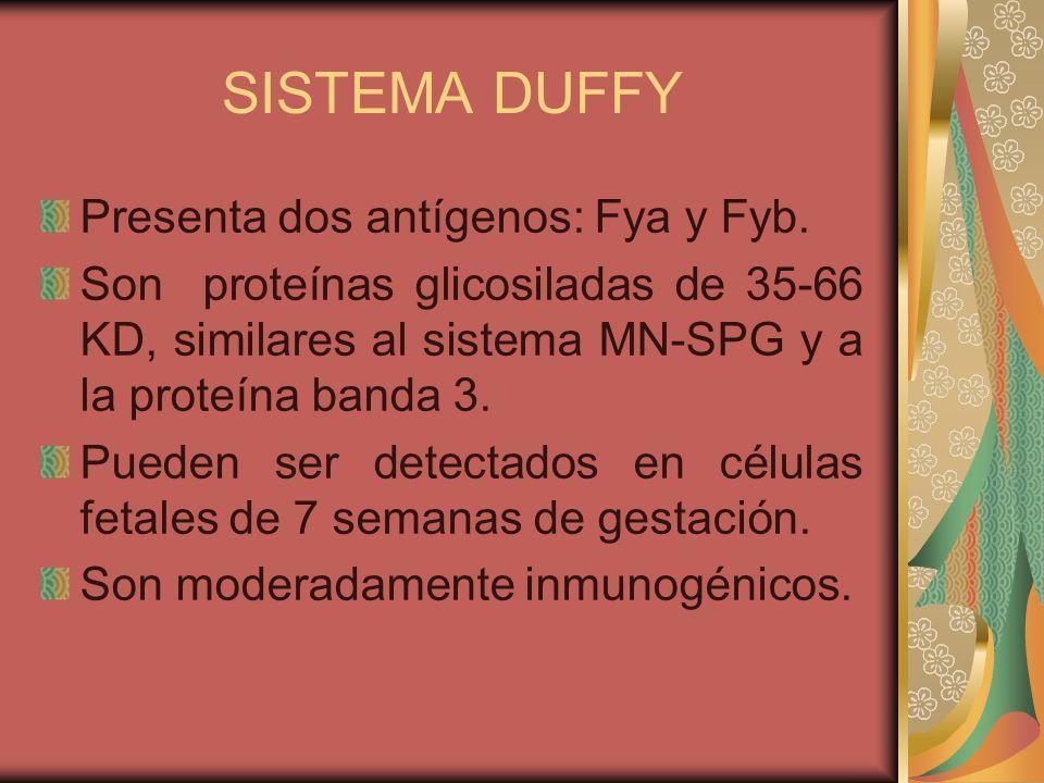 SISTEMA DUFFY Presenta dos antígenos: Fya y Fyb.