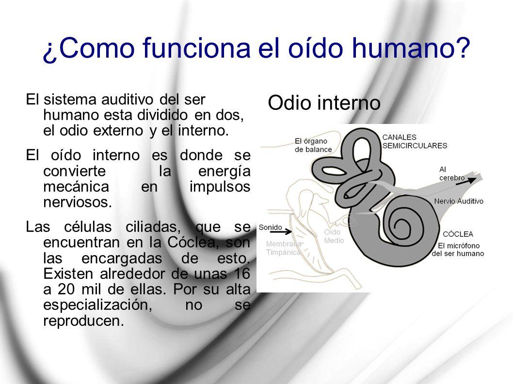 ¿Como funciona el oído humano