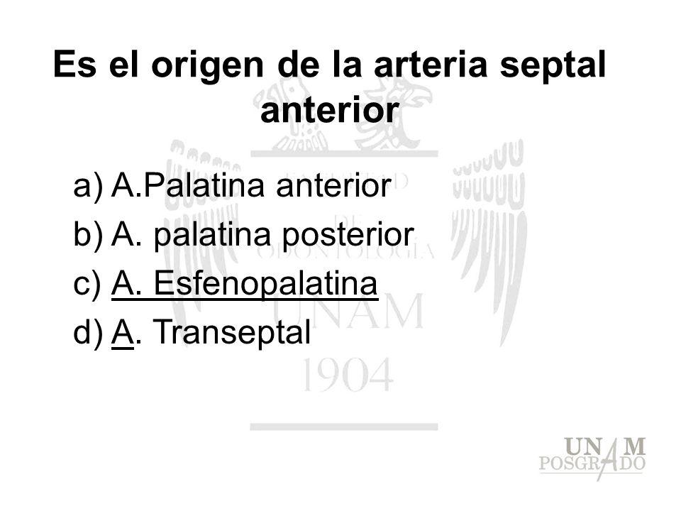 Es el origen de la arteria septal anterior