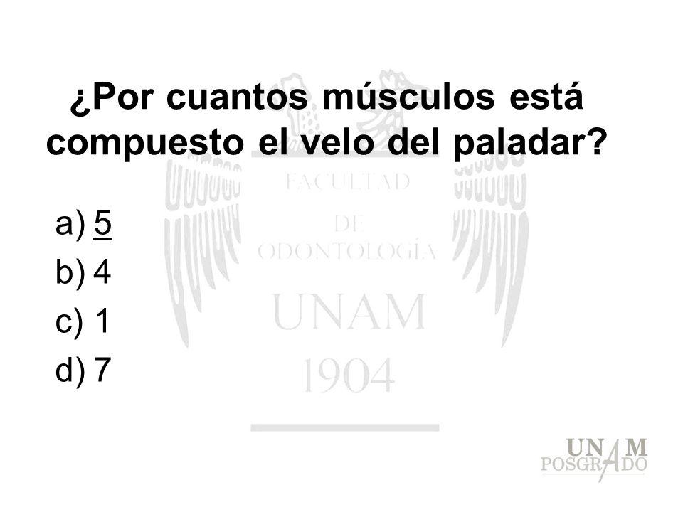 ¿Por cuantos músculos está compuesto el velo del paladar