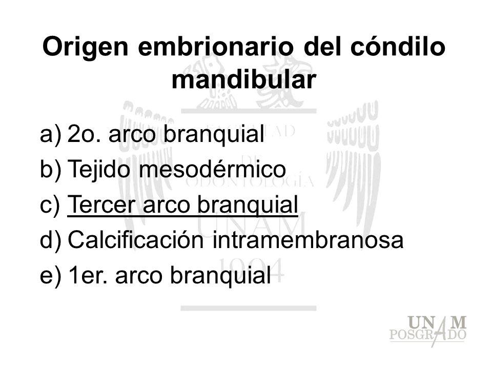 Origen embrionario del cóndilo mandibular