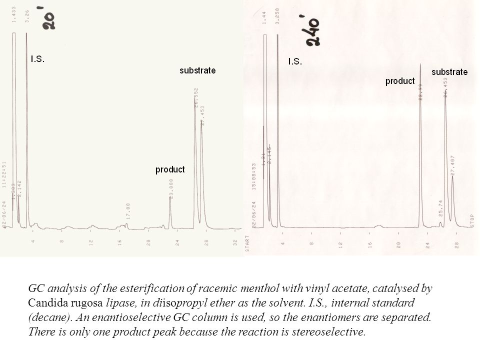 GC analysis of the esterification of racemic menthol with vinyl acetate, catalysed by Candida rugosa lipase, in diisopropyl ether as the solvent.