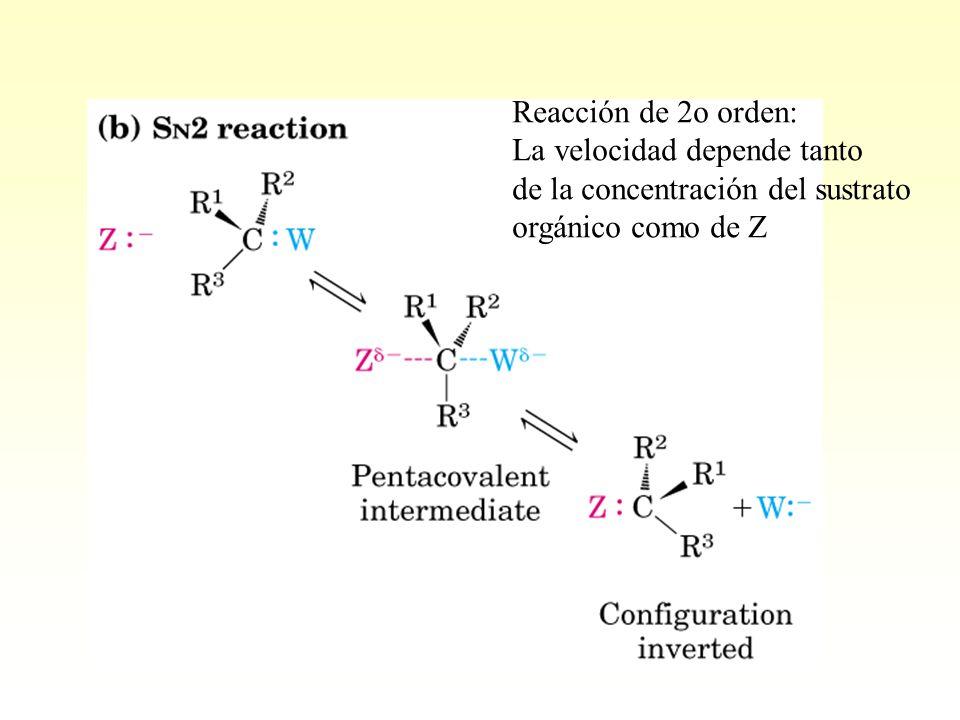 Reacción de 2o orden: La velocidad depende tanto. de la concentración del sustrato.