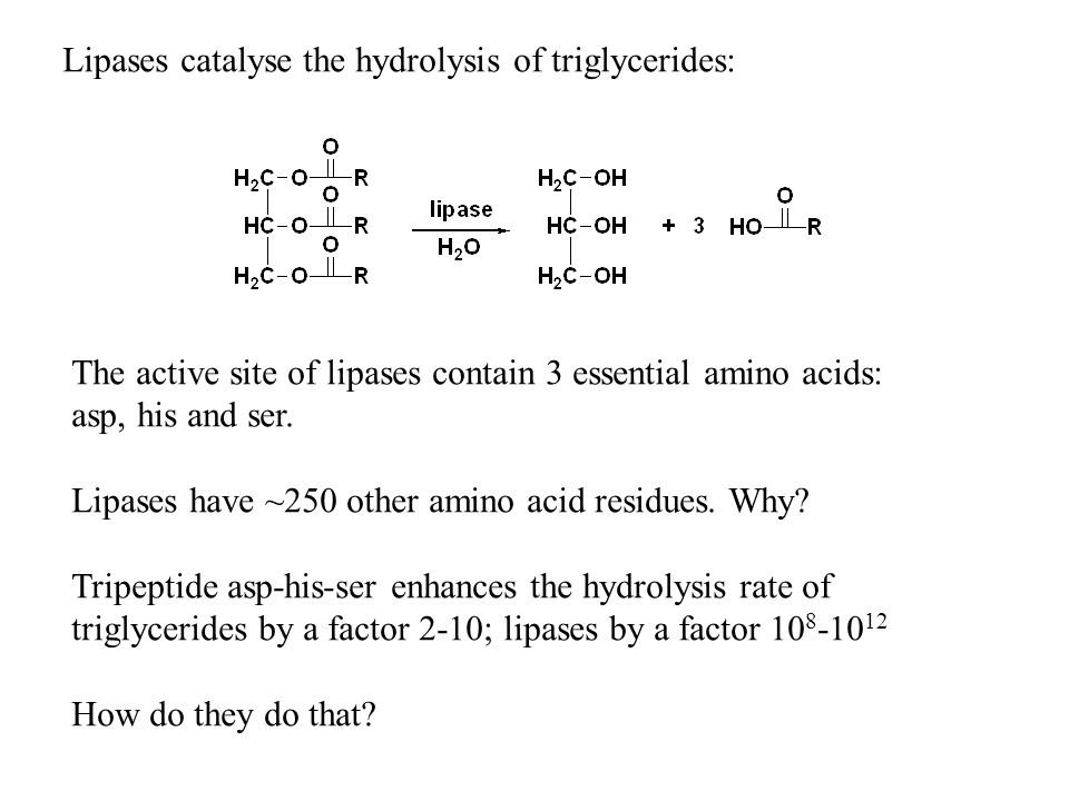 Lipases catalyse the hydrolysis of triglycerides: