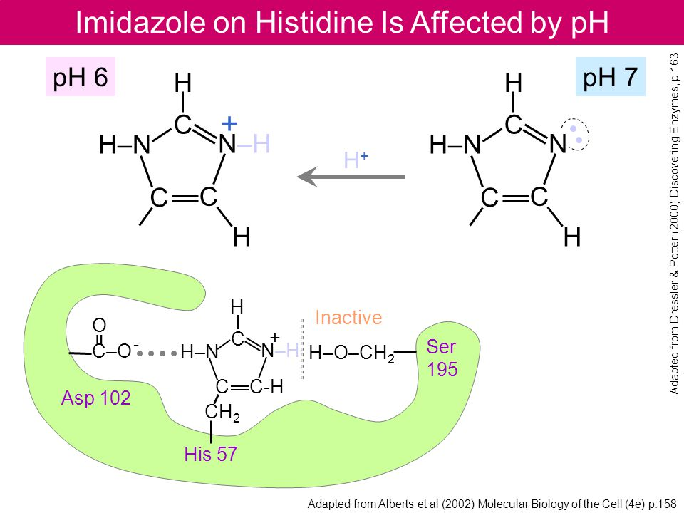 Imidazole on Histidine Is Affected by pH
