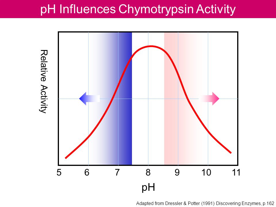 pH Influences Chymotrypsin Activity