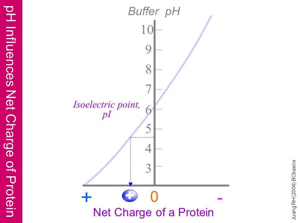+ - + E5-12 pH Influences Net Charge of Protein 10 9 8 7 6 5 4 3