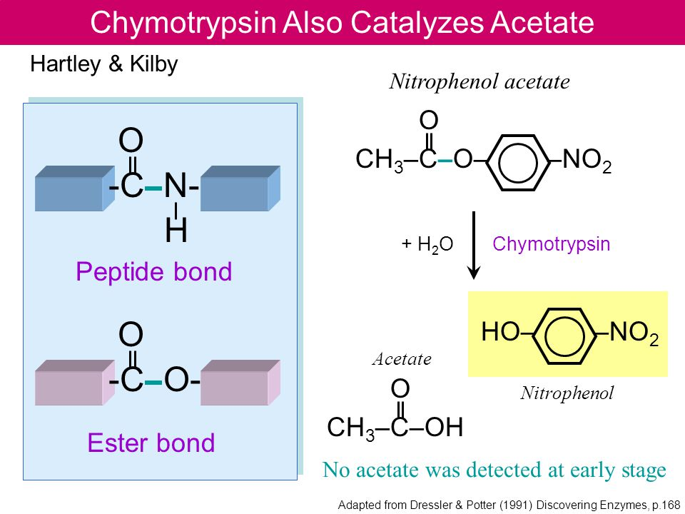 Chymotrypsin Also Catalyzes Acetate