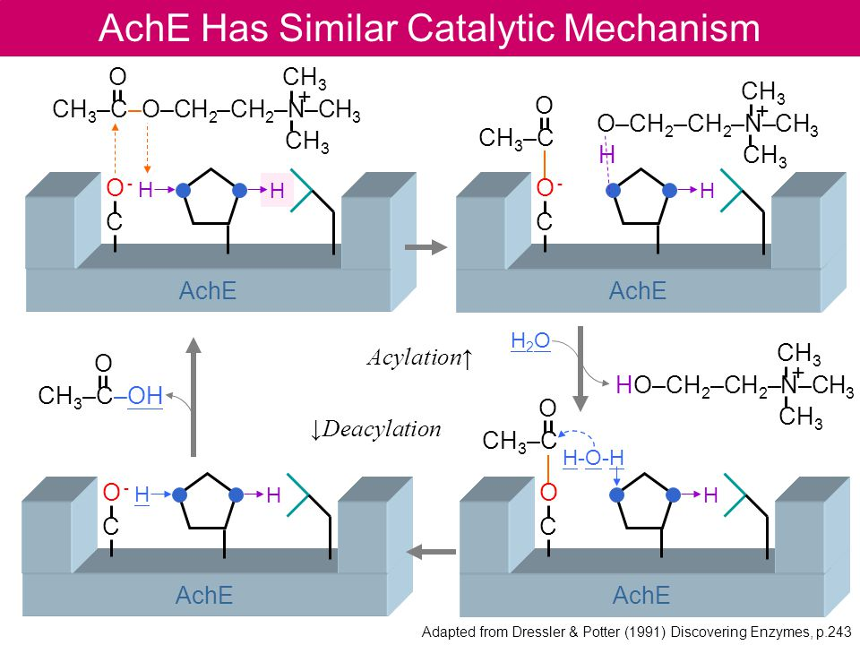 AchE Has Similar Catalytic Mechanism