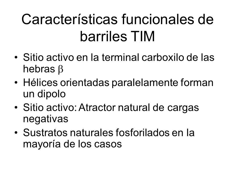 Características funcionales de barriles TIM