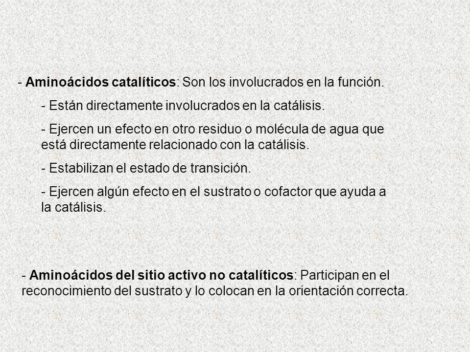 - Aminoácidos catalíticos: Son los involucrados en la función.