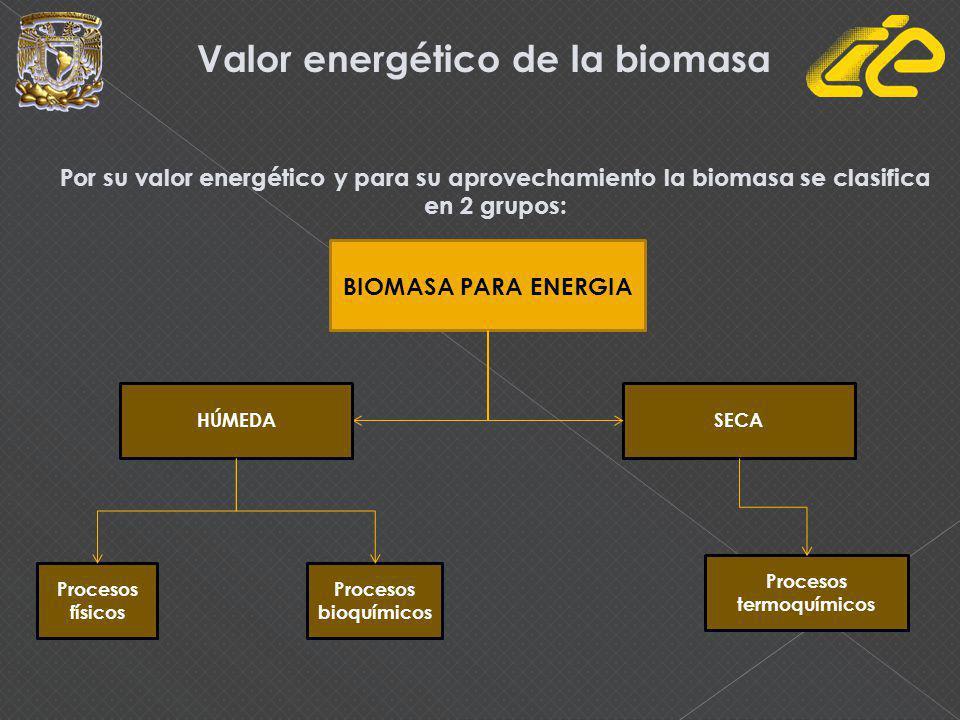 Valor energético de la biomasa Procesos termoquímicos