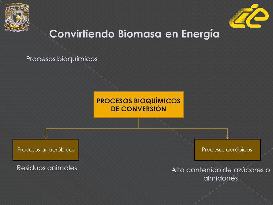 Convirtiendo Biomasa en Energía