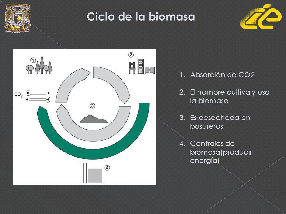Ciclo de la biomasa Absorción de CO2