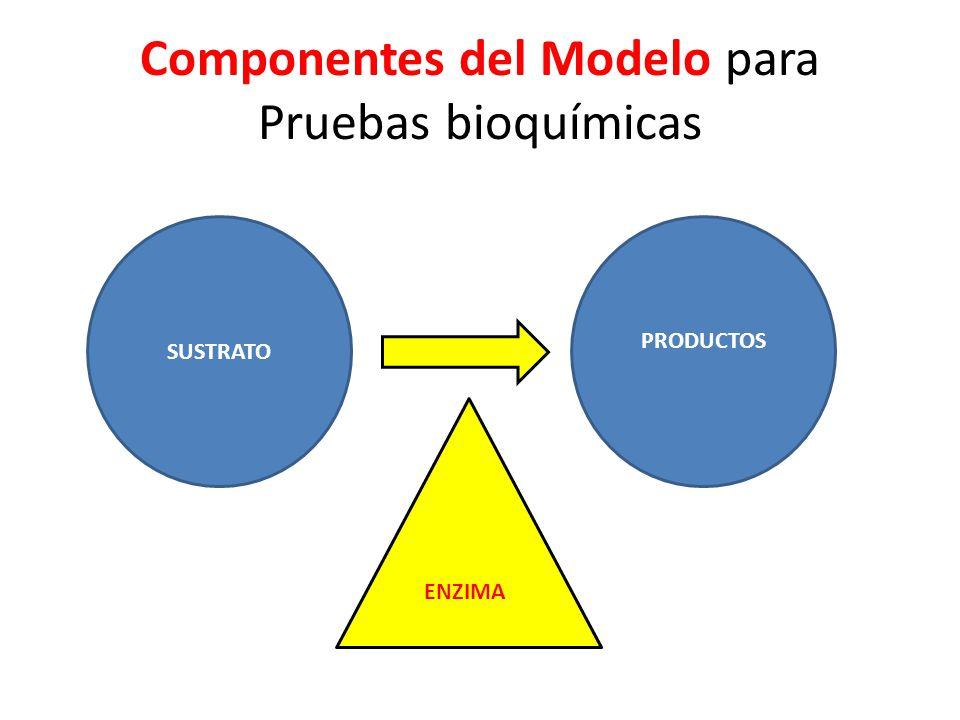 Componentes del Modelo para Pruebas bioquímicas
