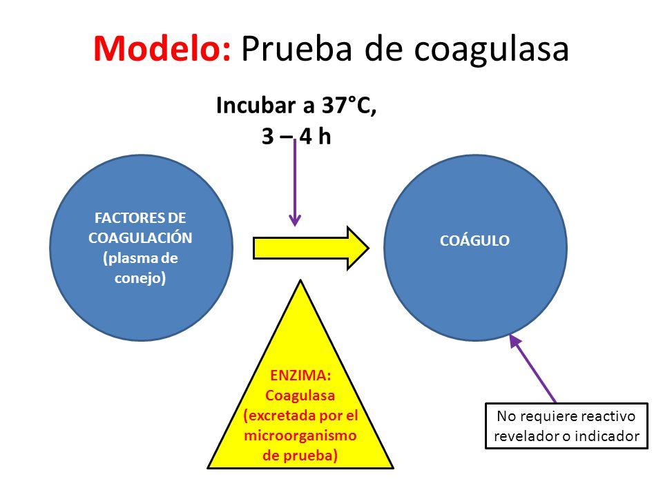 Modelo: Prueba de coagulasa