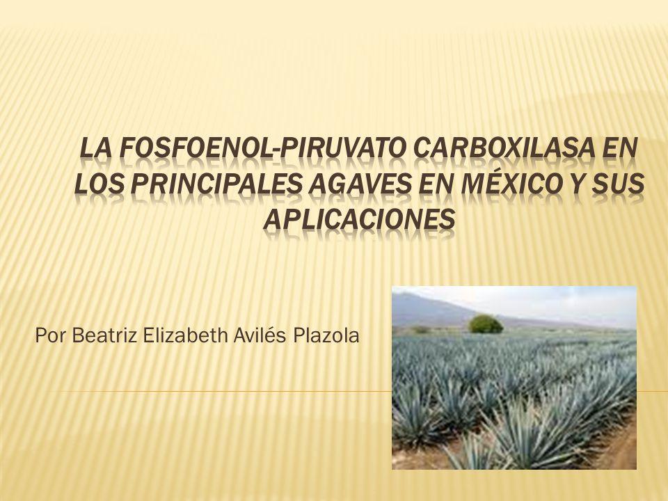 Por Beatriz Elizabeth Avilés Plazola