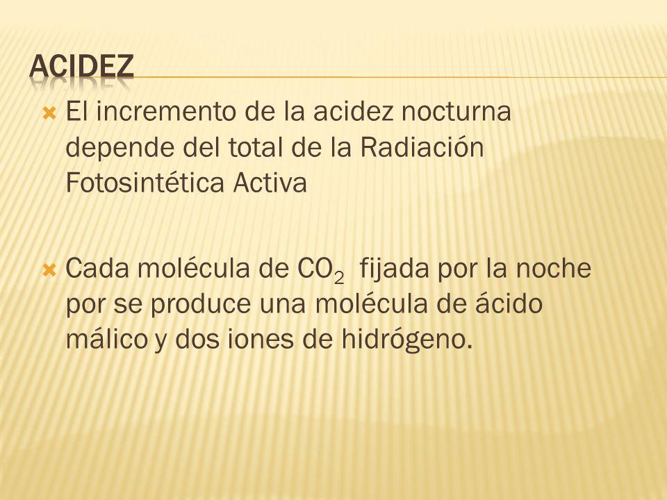 Acidez El incremento de la acidez nocturna depende del total de la Radiación Fotosintética Activa.