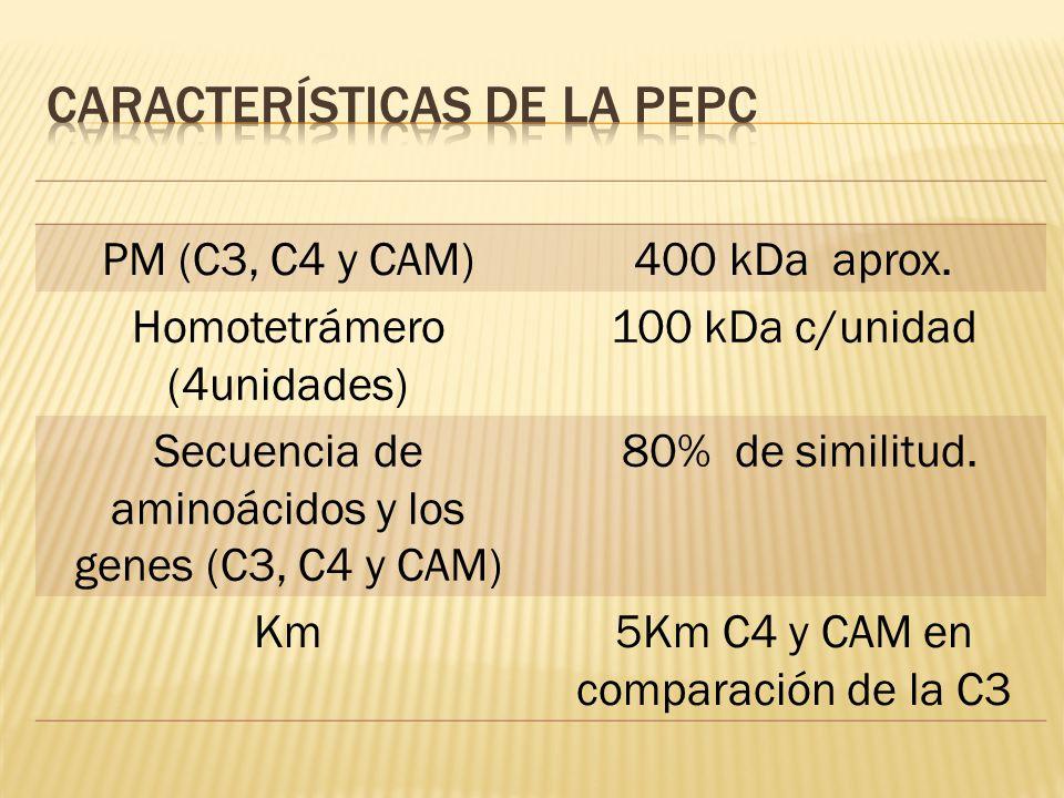 Características de la PEPC