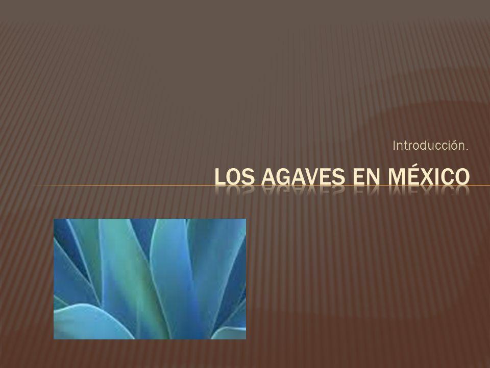 Introducción. Los agaves en México