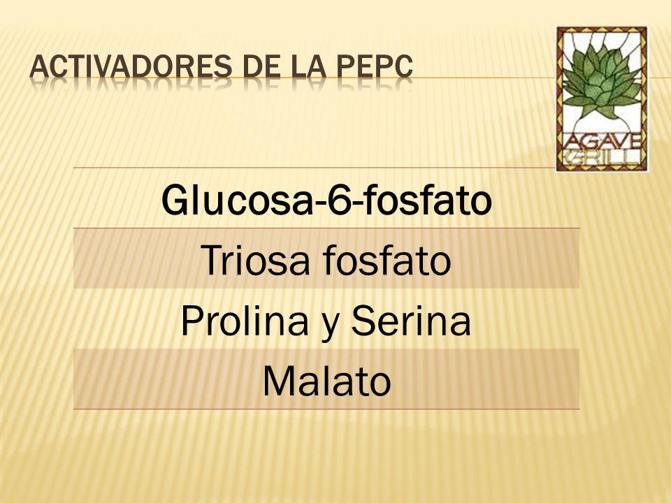 Glucosa-6-fosfato Triosa fosfato Prolina y Serina Malato