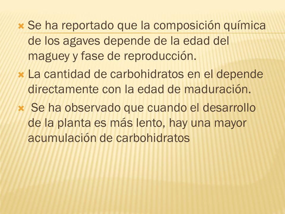 Se ha reportado que la composición química de los agaves depende de la edad del maguey y fase de reproducción.