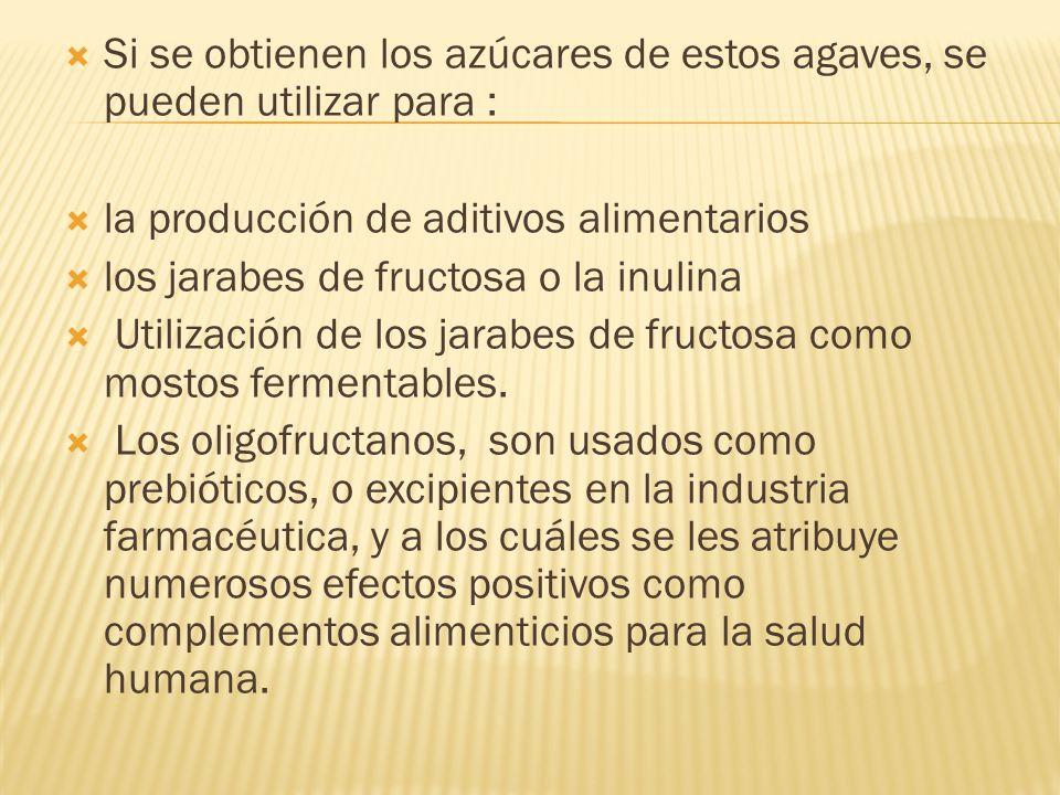 Si se obtienen los azúcares de estos agaves, se pueden utilizar para :